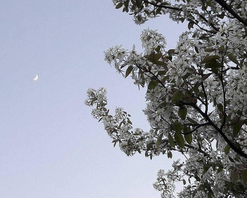 bloem1-005