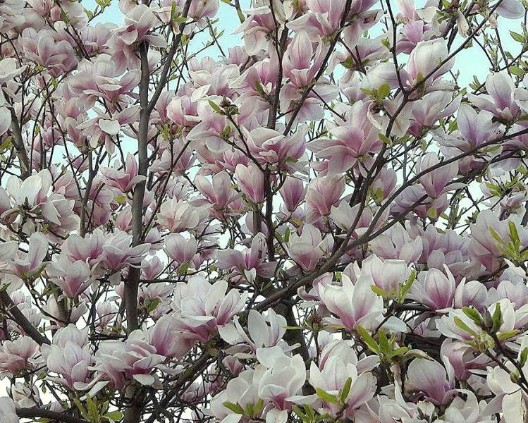 bloem2-004