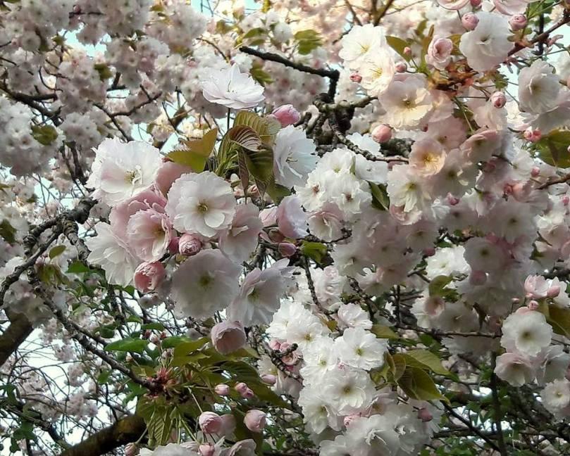 bloem5-004
